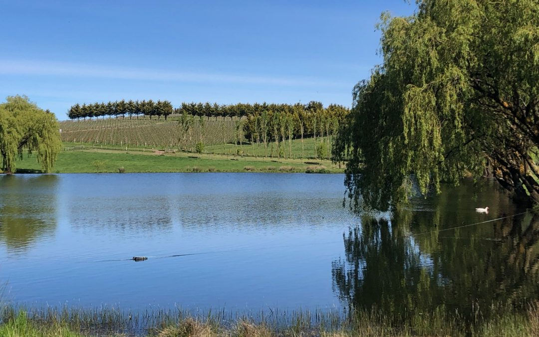 Winery in focus – Curly Flat